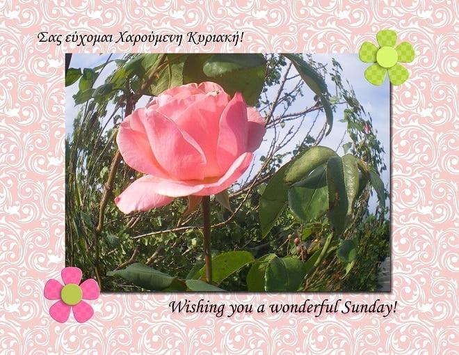 Happy Sunday-001
