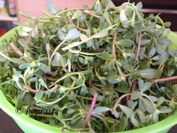 tender purslane tops