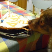Apple and Banana Olive Oil Doggie Birthday Cake