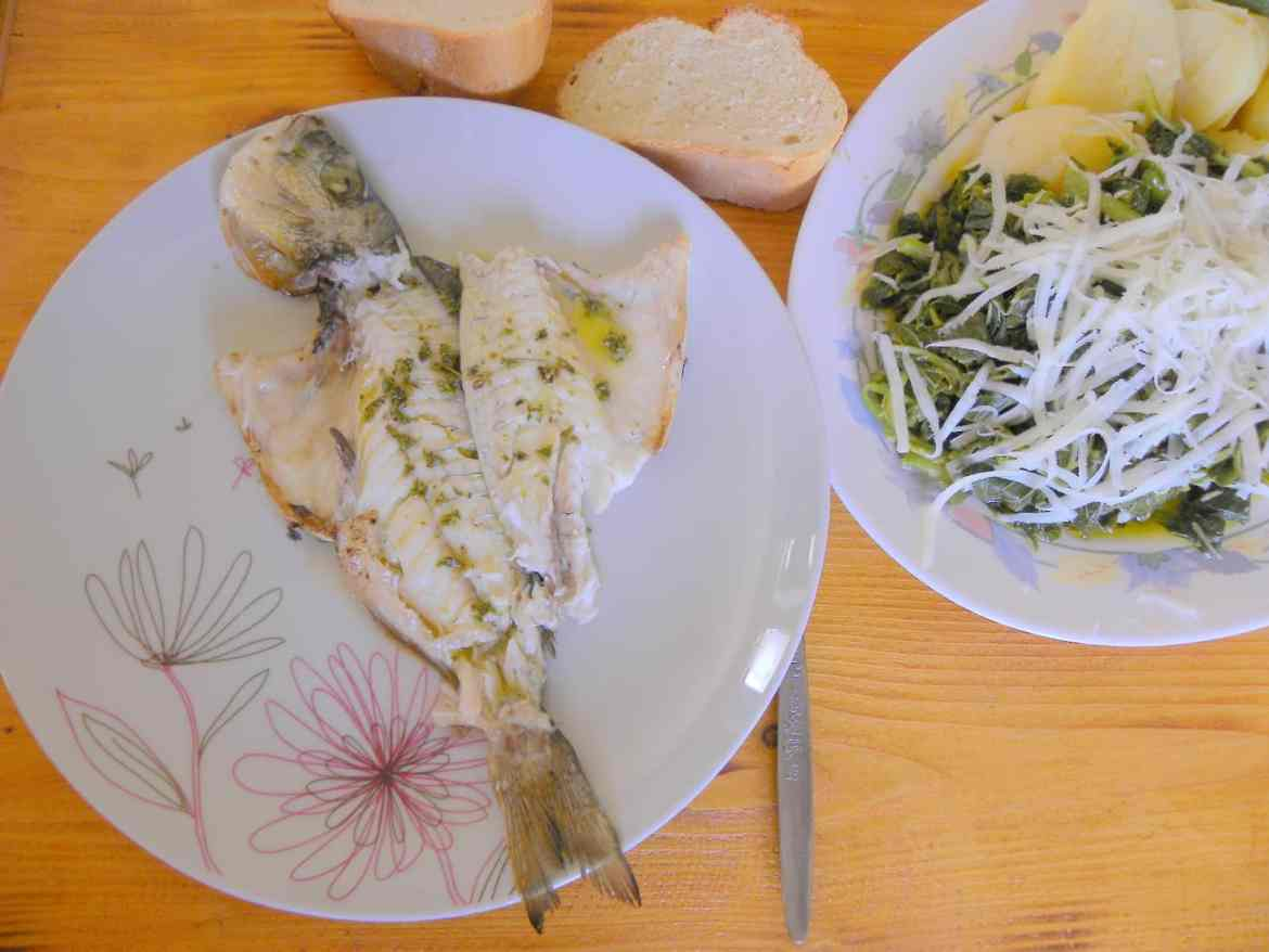 Sea bream with vlita image