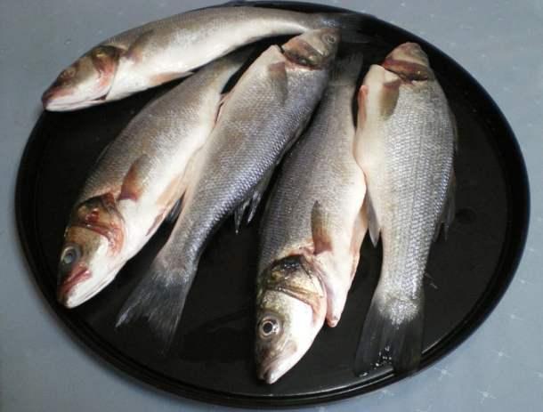 Lavrakia seas bass image