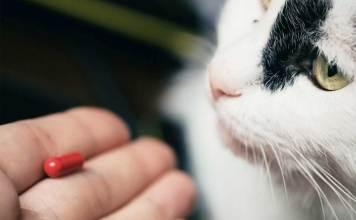 Vitamin Kucing yang Bagus