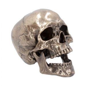 Crâne à Mâchoire Articulée