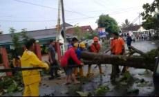Permalink ke Hujan Disertai Angin Kencang, Pohon Jati di Bandar Jaya Tumbang