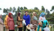 Permalink ke Mantan Pejabat Pemkot Palembang Ramai-Ramai Panen Sayur di Kebun Ibu Gubernur Sumsel