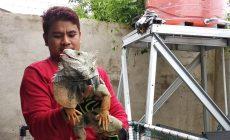 Permalink to Pria Ini Hasilkan Omzet Jutaan Rupiah Dari Hobi Pelihara Iguana