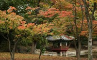 Perfect autumn weather in Seoul : Korea.net : The official ...