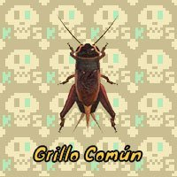 Grillo Común en Animal Crossing New Horizons