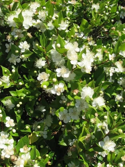 Welche Blumen Blhen Im Frhling Krokusse Blumentopf