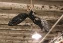 Анна Богіджан. Armenity. Фрагмент інсталяції. Вірменський павільйон–переможець 56-ої Венеційської бієнале.