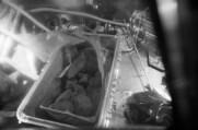Kontejner s lunárními vzorky Apolla 11 po otevření v LRL
