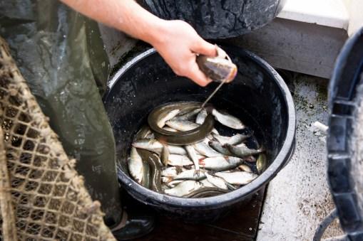 Fischerei Boesenecker