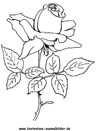 Rosen - Blumen ausmalen Malvorlagen Rosen
