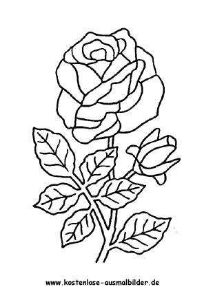 Rosen Blumen Ausmalen Malvorlagen Rosen