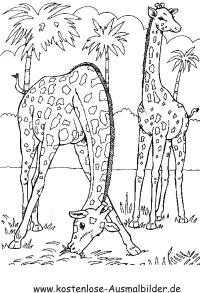 Ausmalbilder Giraffen im Dschungel - Tiere zum ausmalen