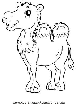 Kostenlose Ausmalbilder  Ausmalbild Kamel