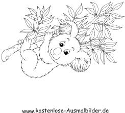 Ausmalbilder Koala - Tiere zum ausmalen Malvorlagen