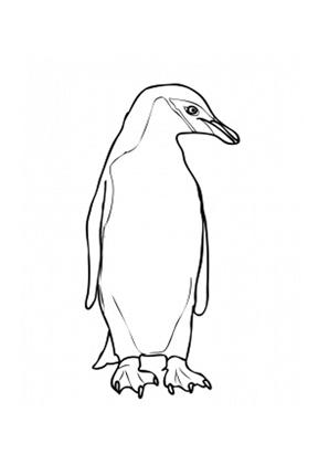Ausmalbild Langschwanz Pinguin zum Ausdrucken