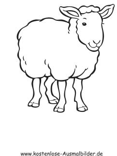 Ausmalbild Schaf 3 zum Ausdrucken