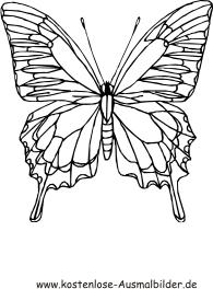 Malvorlagen Schmetterling Pdf