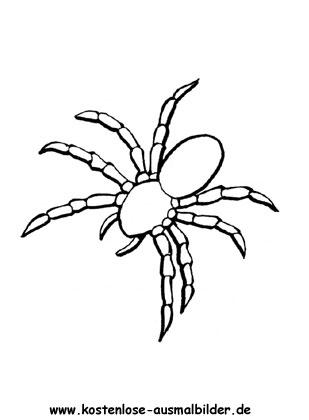 Ausmalbilder Spinne 2 - Tiere zum ausmalen Malvorlagen