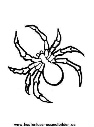 Ausmalbilder Spinne - Tiere zum ausmalen Malvorlagen Spinnen