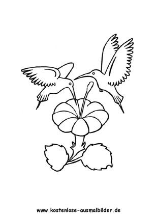 Ausmalbilder Kolibri 1 Tiere Zum Ausmalen Malvorlagen