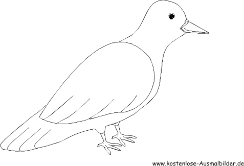 Ausmalbild Taube zum Ausdrucken