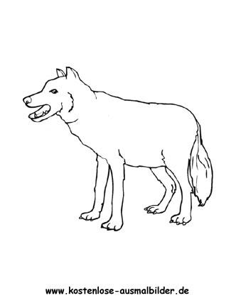 Ausmalbilder Wolf 1 - Tiere zum ausmalen Malvorlagen Woelfe