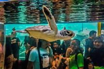 Ums Marine Aquarium