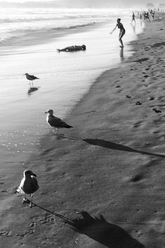 black and white birds photo