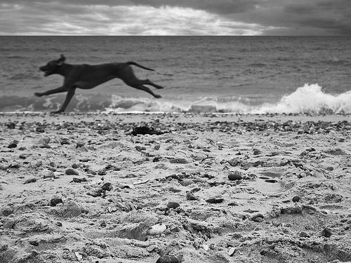 black and white happy dog photo