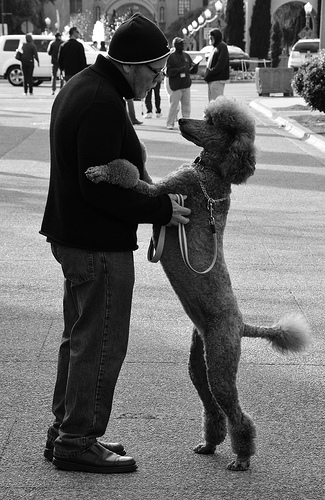 black and white man and dog photo