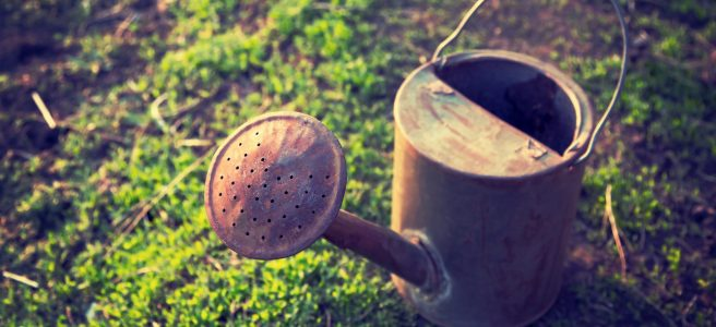 rusty watering can sitting on moss