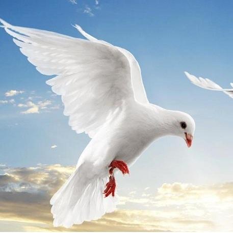 Güvercin Pisliklerinin Yaydığı Hastalıklar