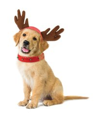 Holiday Dog Reindeer Costume