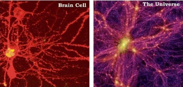 Beyin Hücresi ve Evren