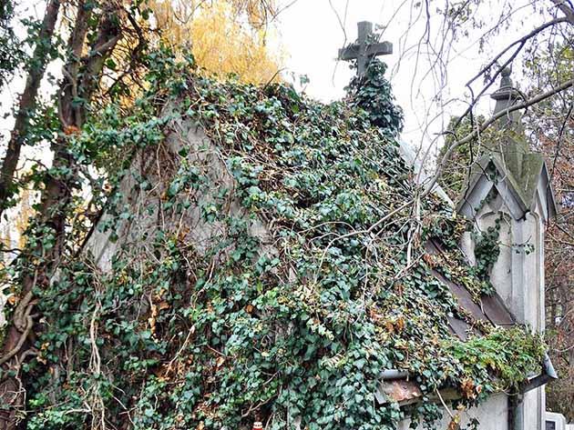 katolikus temeto marosvasarhely (11)