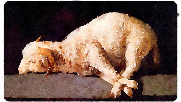 """Résultat de recherche d'images pour """"agneau immolé"""""""