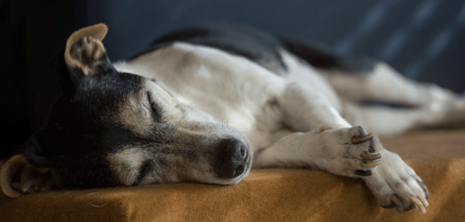 Helpful Tips to Take Care of a Senior Dog