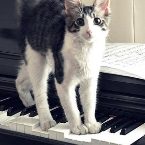 katmuziek
