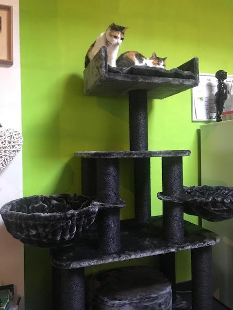 Black-Panther-Blackline-dark-grey-van-Kelly
