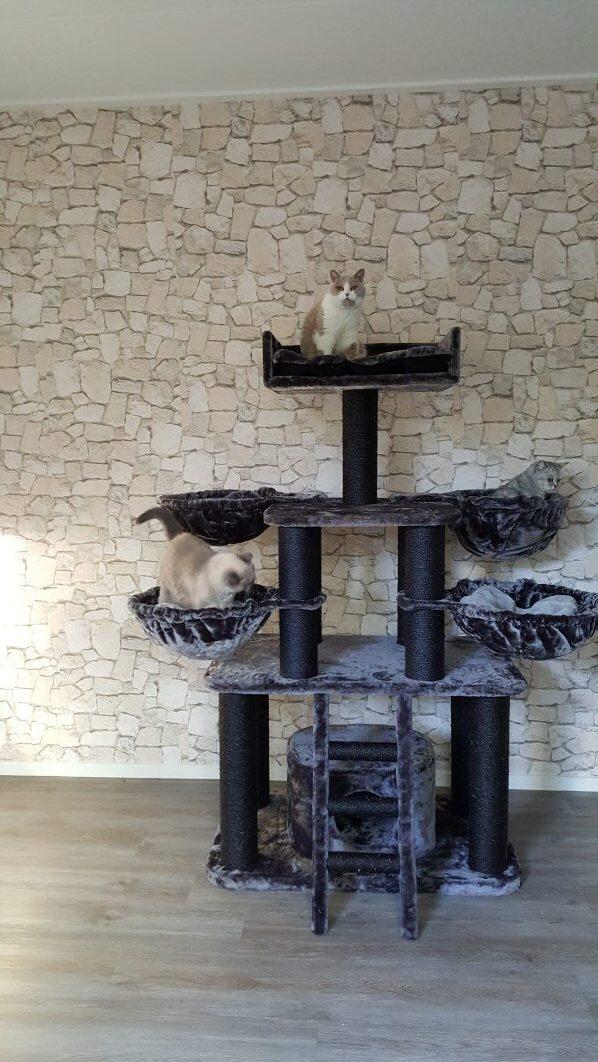 black-panther-plus-blackline-