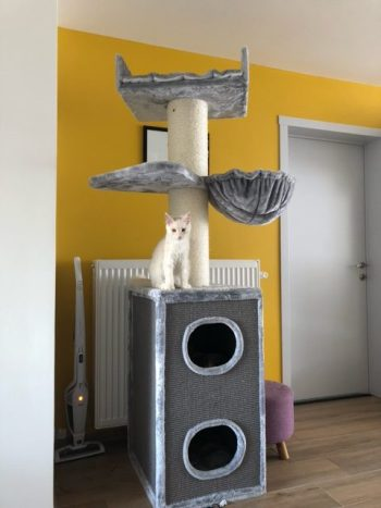 Krabpaal Maine Coon Tower Box Comfort light grey Katrien V