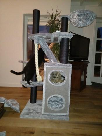 Marlieke-Cat-Penthouse-Blackline-Light-grey
