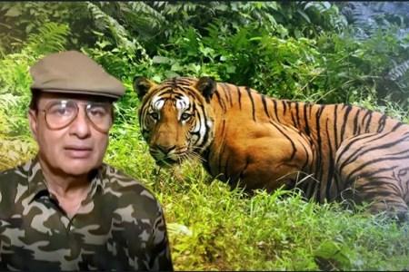 Avni Tigress killing to clear land for developers