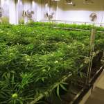New Mexico Looks To Possibly Legalize Marijuana After Bill Passes House
