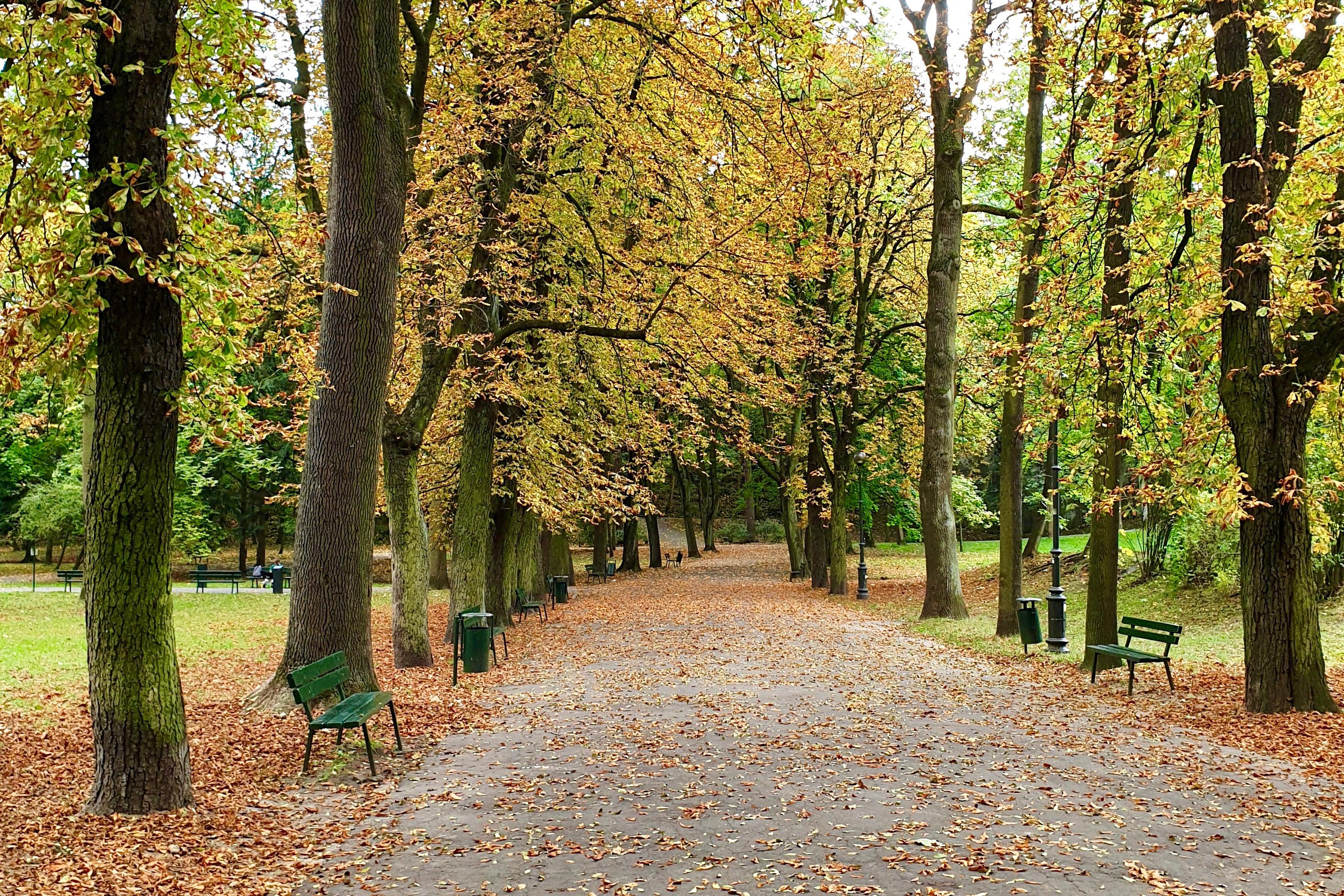 Park Bednarskiego spacer