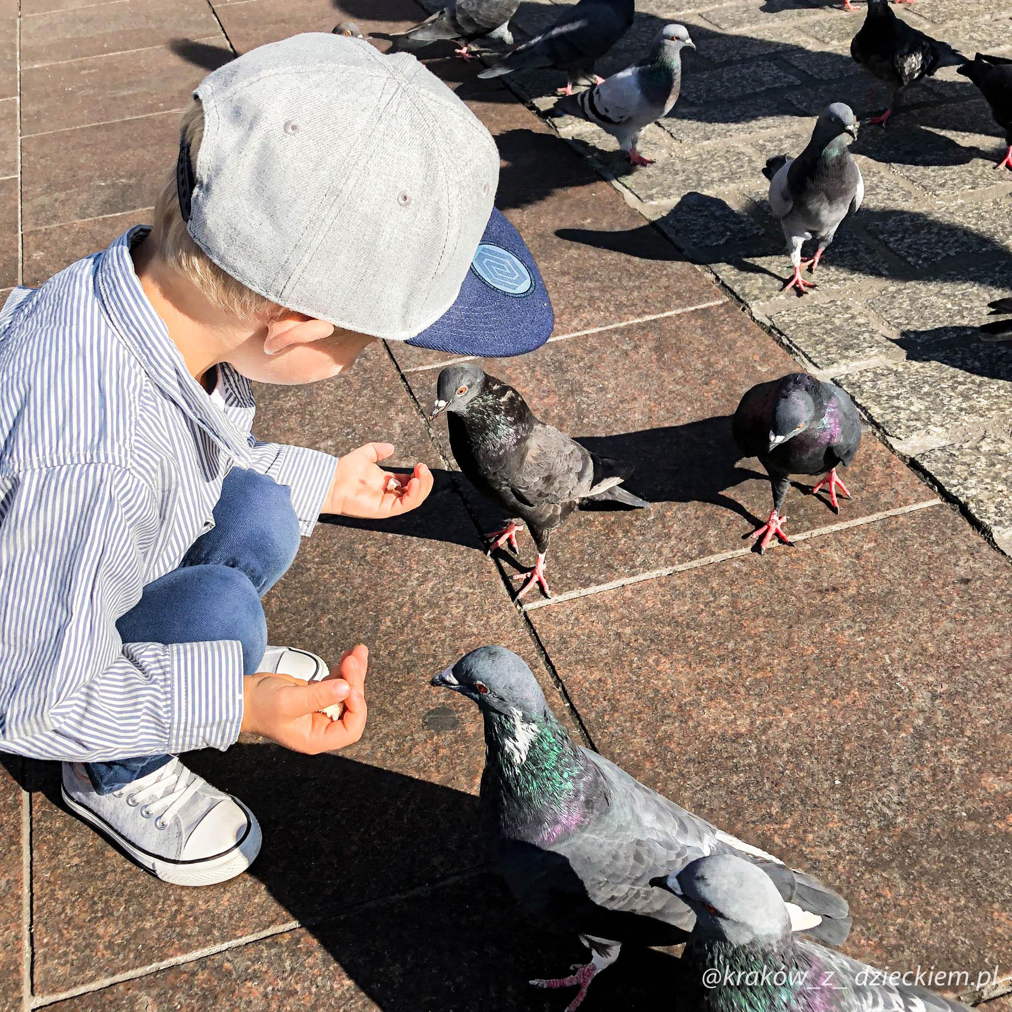 krakowskie legendy - gołębie na rynku