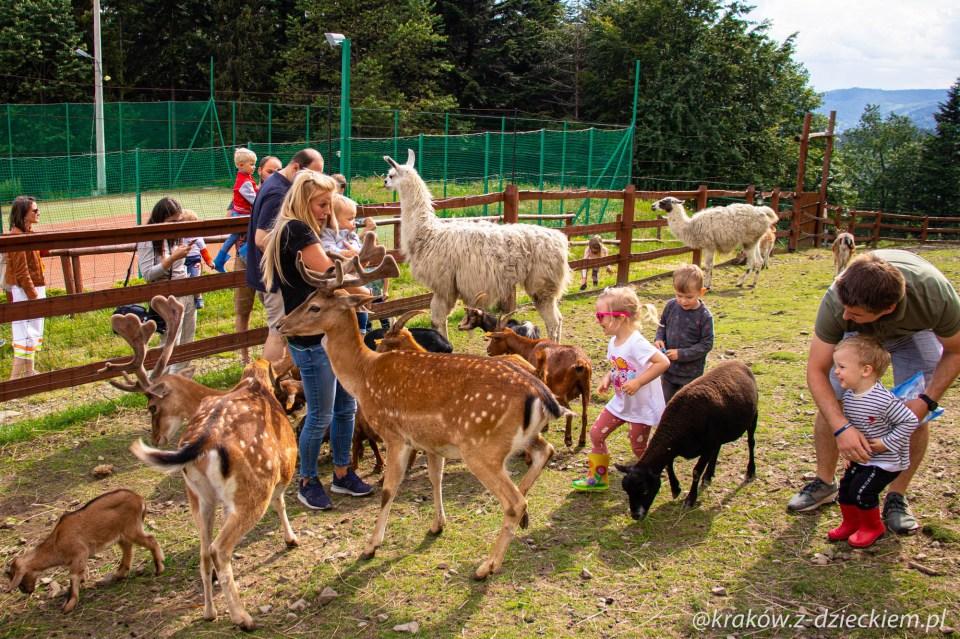 Mini zoo, Beskidzki Raj